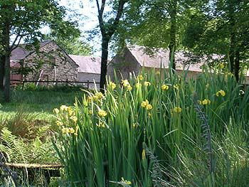 farm_daffodils